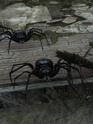 黒蜘蛛.jpg