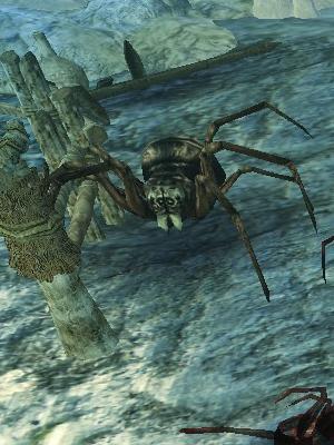 兵隊蜘蛛.jpg