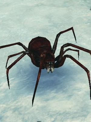 憂鬱な兵隊蜘蛛.jpg