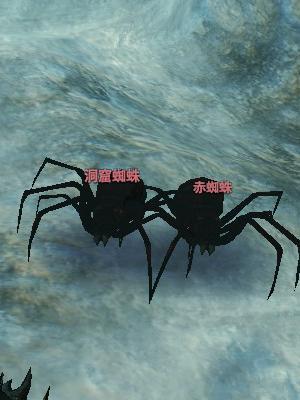 洞窟蜘蛛.jpg
