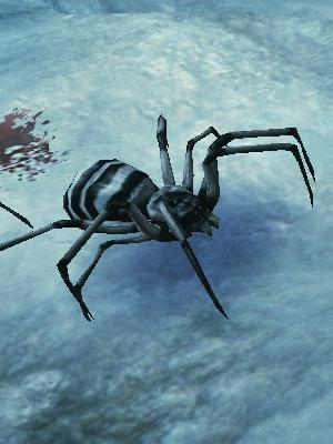 白縞蜘蛛.jpg