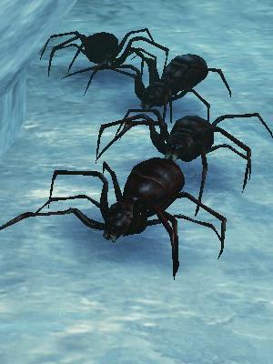 赤蜘蛛.jpg