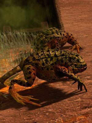 毒蛙.jpg