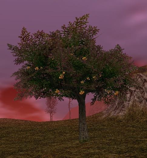 アラトの木