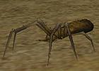 monster_yellow_ant.JPG