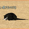y_black_armadillo.jpg
