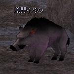 Wild_Boar.jpg
