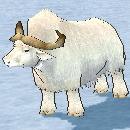 white_buffalo.jpg