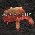 red_blind_crab.jpg