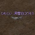 white_cave_bat.jpg