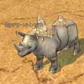 desert_rhinoceros_kid.jpg