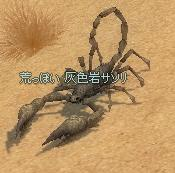 gray_scorpion.jpg