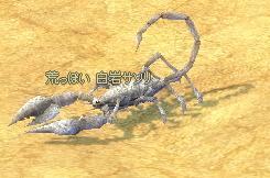 white_scorpion.jpg
