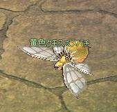 黄色くもスズメバチ.JPG