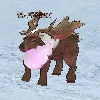 Tundra_Reindeer.jpg