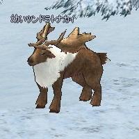 Tundra_Reindeer_kid.jpg