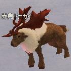 red_reindeer.jpg