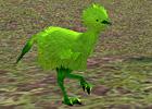 green_kiwi.jpg