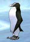 white_penguin.jpg