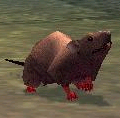 Field_Mouse_Kid.png