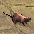 d_f_mouse.jpg