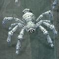 Pot_Spider.jpg