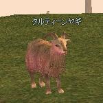 mabinogi_2009_03_05_005.JPG
