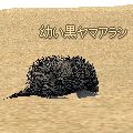 Little_Black_Porcupine.jpg