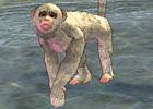 onsen_monkey.jpg