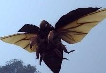 カミキリ(飛行中)