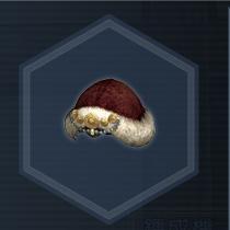 紅椿媛帽.jpg