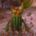 Flower_Cactus.png