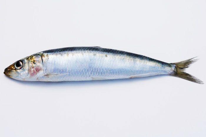 sardine-700x466.jpg