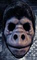 Monkey_Business