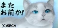 うんざり猫.jpg