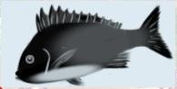 魚拓.jpg