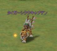 タイガーシククキャプテン.JPG