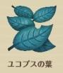 ユコプスの葉.jpg