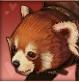 Lesser_Panda.png
