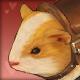 Pet_Guinea.png