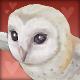 Pet_Owl.png