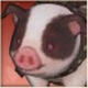 Pet_piggy_spotted.png