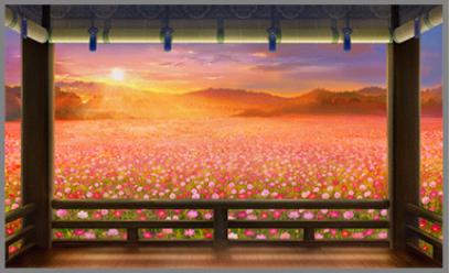 二十四節気 処暑・秋桜