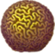 Brain_Coral_Icon.png