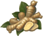Ginger_Icon.png