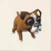 ボクサー犬・レオ.PNG