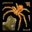 crabspidershell_64x64.png