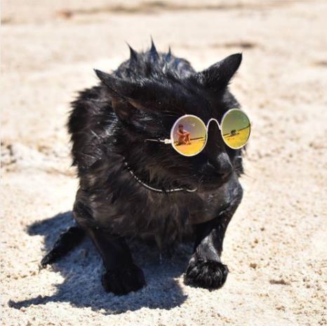 catsummer.jpg